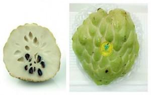 Chuyên cung cấp cây giống na bở Đài Loan, cây na bở, cây na Đài Loan, cây na, na Đài Loan, na bở