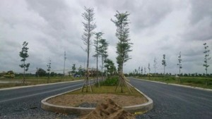 Đất nền khu công nghiệp Tân Kim