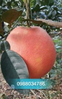 Chuyên Cung cấp các loại cây ăn quả