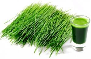 Mầm lúa mạch - Giá 65.000đ/1kg