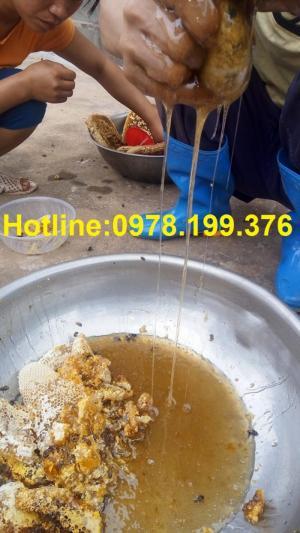 Mật ong Sơn Động Bắc Giang