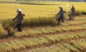 Máy gặt lúa mini gia đình, máy gặt lúa cầm tay honda Gx35 giá rẻ nhất