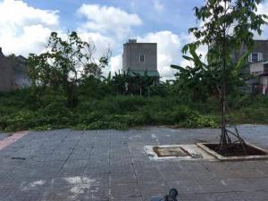 Bán đất mặt tiền đường 81 ngay khu TDC 44ha, TC-SHR, Giá rẻ