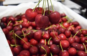 Cherry đỏ Mỹ tươi ngon đã về tại Klever Fruits