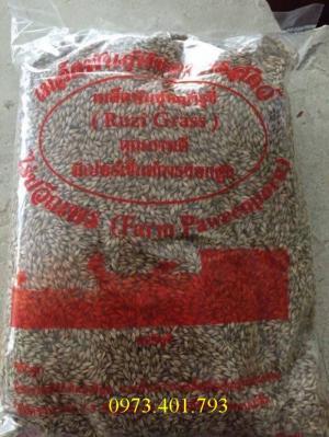 Hạt giống  cỏ mombosa guinea grass chất lượng