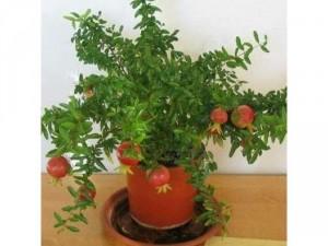 Hạt giống cây ăn quả trồng lâu năm