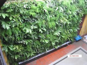Thiết kế thi công vườn tường cây xanh, sân vườn, tiểu cảnh với hệ thống tưới tự động
