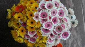 Hoa tươi Đà Lạt nhà trồng giá vườn