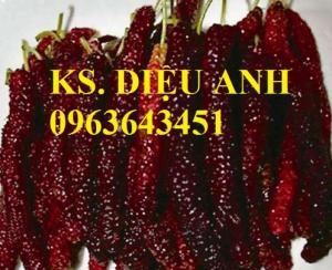 Cây giống dâu quả dài Đài Loan, dâu siêu dài, cây dâu tằm bạn có muốn trồng không?