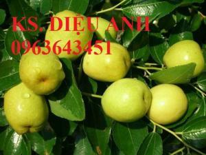 Mua cây giống táo đào vàng, cây giống táo chua, cây giống táo chuẩn F1 ở đâu?