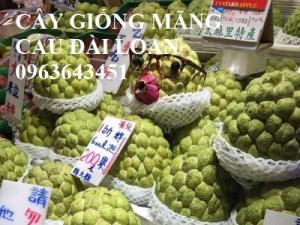 Mua cây giống na bở Đài Loan, mãng cầu Đài Loan, mãng cầu Đài Loan, mãng cầu bở Đài Loan