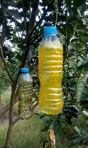 Cung cấp bình xịt ruồi vàng, chai xịt ruồi vàng, số lượng lớn, giao hàng toàn quốc.
