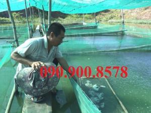 Lưới ô vuông 3mm, lưới làm vèo nuôi cá