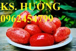 Cung cấp cây giống nhót mỹ, cây nhót tây (nhót ngọt cao sản), chuẩn giống nhập khẩu, giao hàng toàn quốc