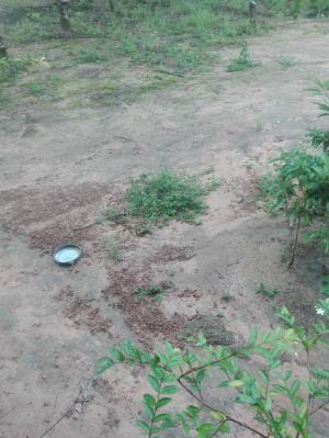 Cần bán lô đất trắng 200ha