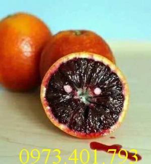 Các loại cây giống cam