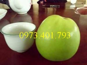 Các loại cây giống táo chất lượng