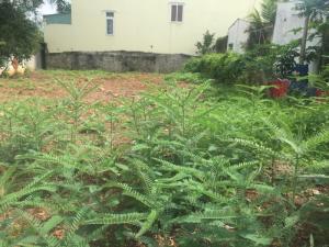 Bán lô đất 12.5 x20m2 gần bar Q5 phường tân bình 2t70