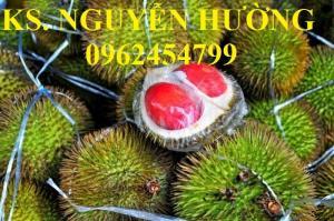 Cung cấp cây giống sầu riêng ruột đỏ, chuẩn giống nhập khẩu, giao hàng toàn quốc