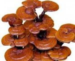 Nấm LINH CHI- Tăng đề kháng,Giảm cholesterol,...