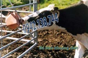 Đá liếm cung cấp khoáng chất vitamin cho bò dê ngựa cừu