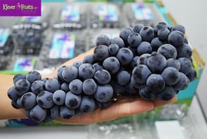 NHO THOMCORD - chủng nho siêu ngon,  ngọt, thơm  đã có mặt tại Klever Fruits
