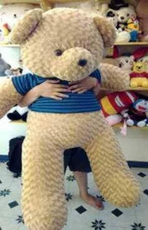 Teddy Việt Nam 60cm