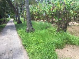 Đất vườn 2 mặt tiền xã Tân Thạch liền kề thị trấn Châu Thành.