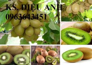 Chuyên cây nhập mới lạ: kiwi, cherry anh đào, cherry Úc, cherry chịu nhiệt, mâm xôi, phúc bồn tử