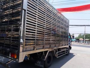 Xe Hyundai Đô Thành Hd99 Thùng Sàn Chở Heo, Vịt .Cabin Sắt Xi Nhập Khẩu
