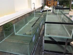 Bán hệ thống bể cá nhà hàng