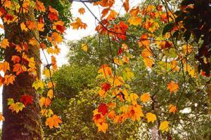 Tour Đà Lạt - Thác liêng Rowoa - Rừng lá Phong