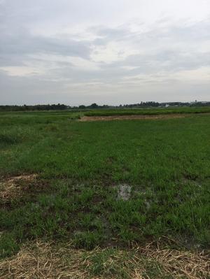 Bán Đất Nông Nghiệp Ở Xã T.Thạnh Đông, Dt 1200( 54X22)