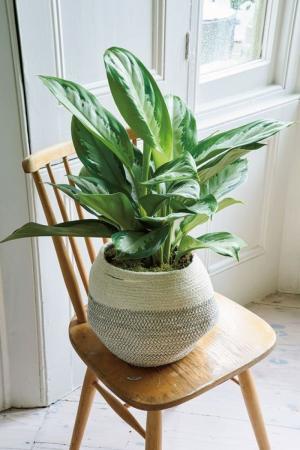 Bán 10 loại cây sống trong nhà lọc không khí