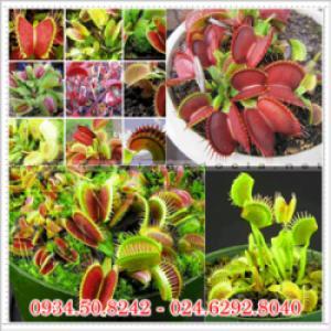 Sỉ lẻ hạt giống hoa
