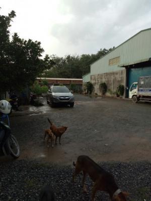 Nhà xưởng 39m x 100m xã nhuận đức huyện củ chi.
