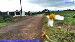 Bán đất bảo lộc mặt tiền đường Trần Nhật Duật 12m mặt đường