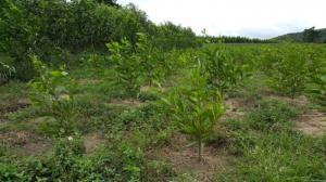 Bán 800ha đất trồng cây ea-sup, daklak