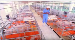 Tấm lót sàn trong chăn nuôi