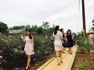 Hình ảnh khách tới thăm vườn hồng