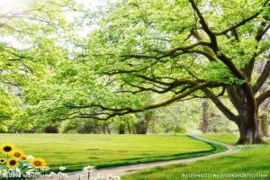Tranh ốp tường , tranh rừng cây
