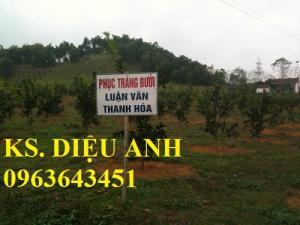 Chuyên cung cấp cây giống bưởi đỏ tiến vua, bưởi đỏ Thanh Hóa, bưởi đỏ luận văn chuẩn F1