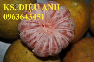 Chuyên cung cấp cây giống bưởi đỏ Tân Lạc, bưởi Hòa Bình, bưởi đào chuyên, bưởi đào đường