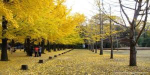 Tour Hàn Quốc - Hoài Niệm Mùa Thu Vàng (6 Ngày 5 Đêm)