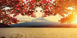 Tour Nhật Bản - Khám Phá Vùng Trời Lá Đỏ (7 Ngày 6 Đêm)