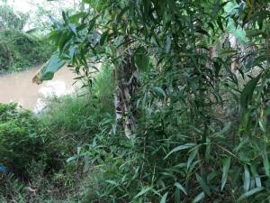 Đất Nông Nghiệp Dt 10.000m2 Tại Ấp Phước Thủy Xã An Phước Huyện Mang Thít Tỉnh Vĩnh Long