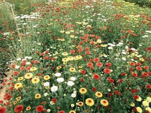 Cung cấp hoa tươi đà lạt tại vườn