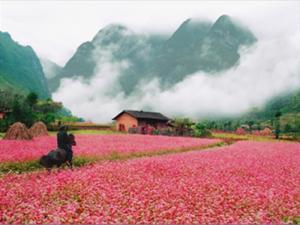 Hà Giang - Cao Nguyên Đá Đồng Văn