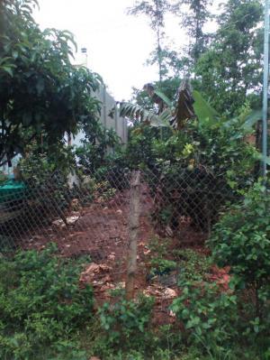 Bán Đất và nhà ở Tân Hạnh, Xuân Bảo, Cẩm Mỹ, Đồng Nai