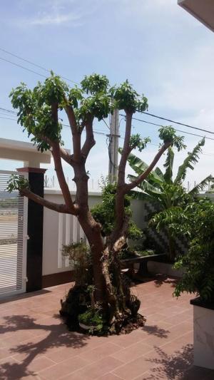 Cần bán biệt thự mini xã Vĩnh Thái.